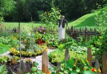 benefits of planting your own vegetable garden